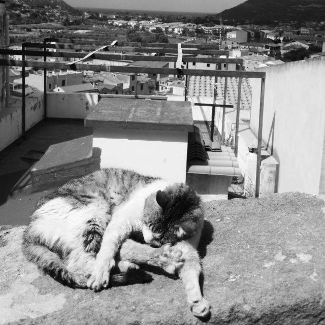 Cest dur la vie de chat sardeen ce moment jehellip